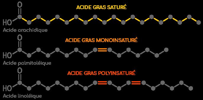 Acides gras: types, fonctions et consommation
