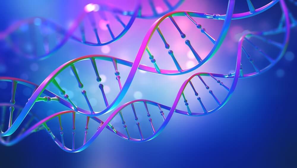 ADN: découverte, structure et mutations