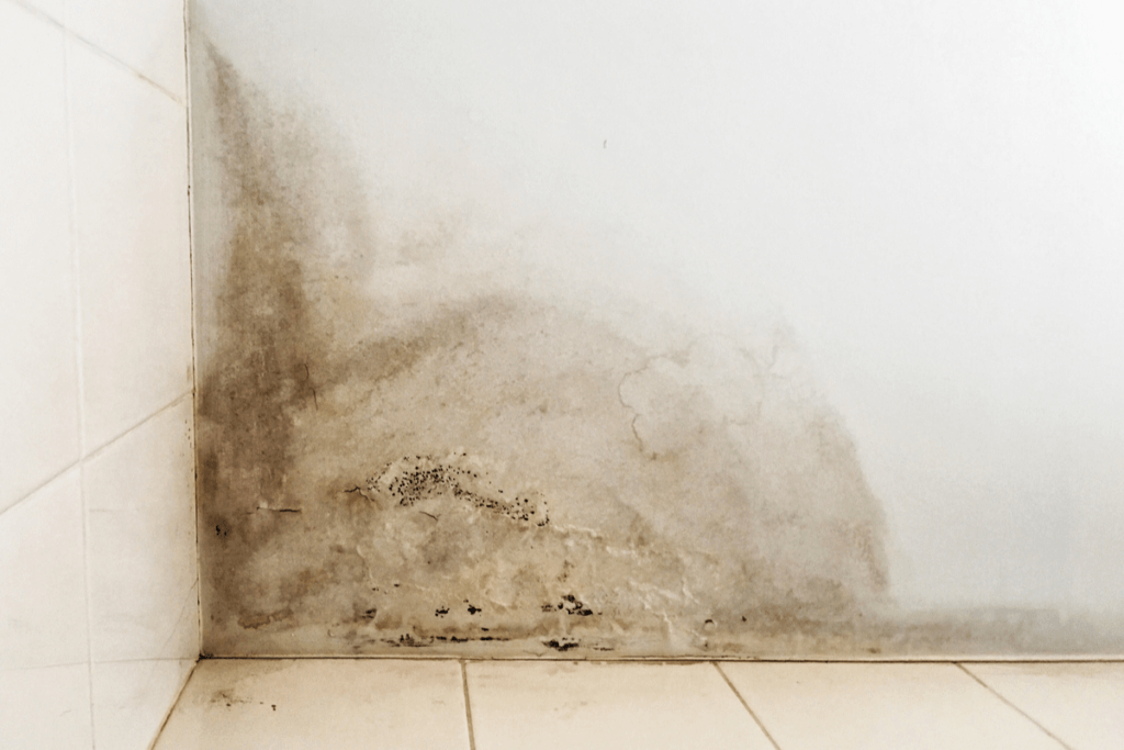 Mold on the wall causes a moisture allergy.