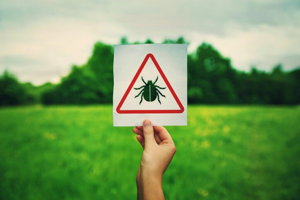 Causas y factores de riesgo de la enfermedad de Lyme