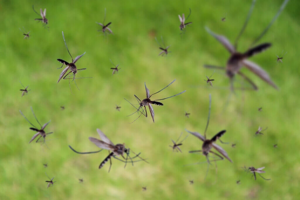 The Symptoms, Treatment and Causes of Malaria