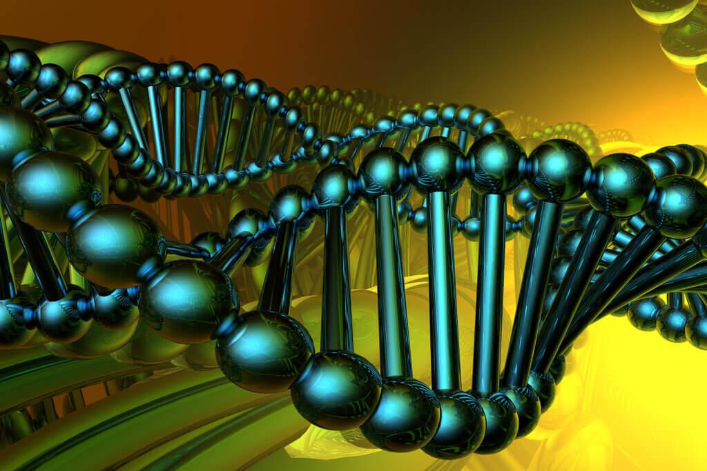 Los tipos de ADN