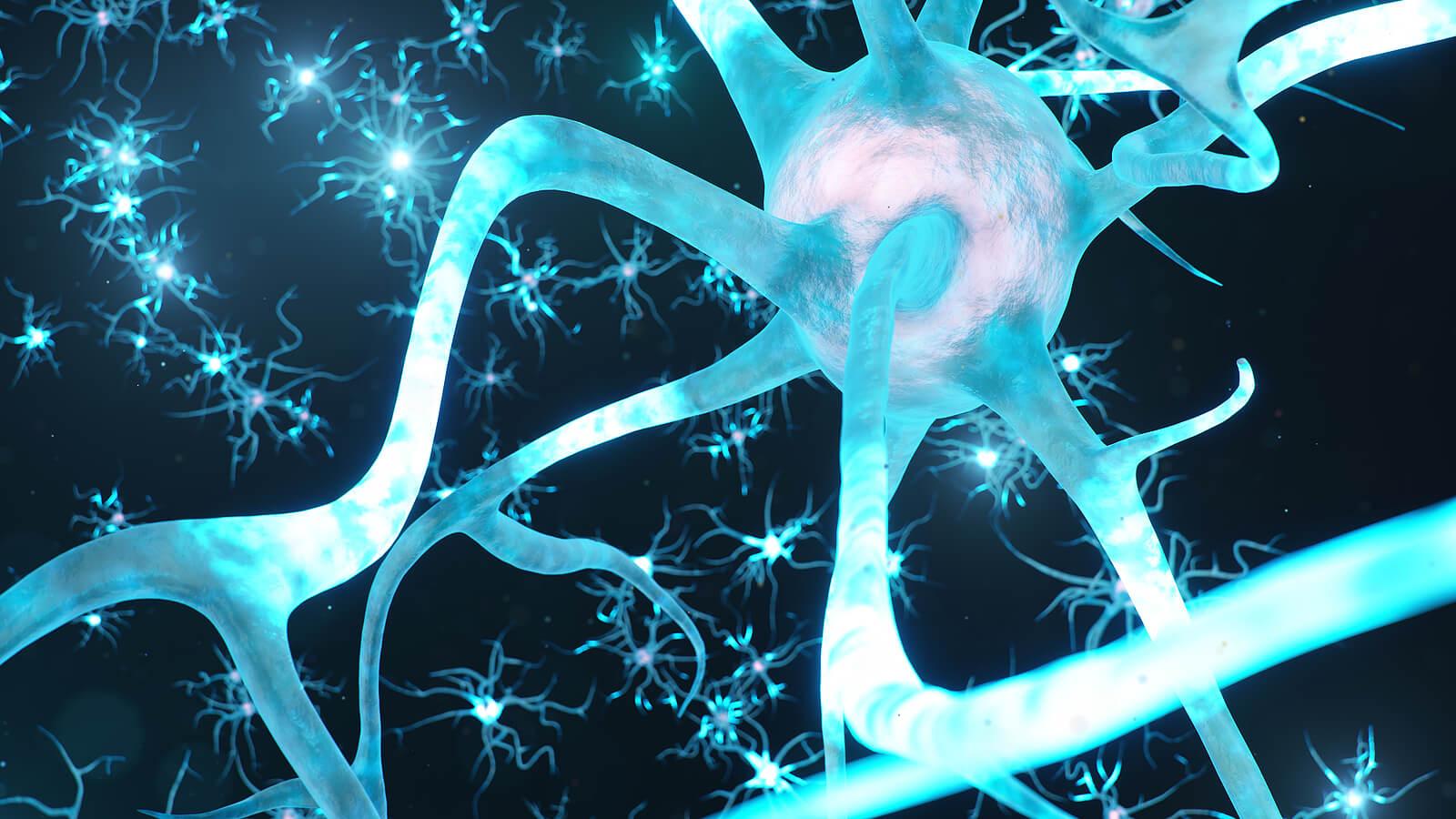 El reloj biológico y las neuronas